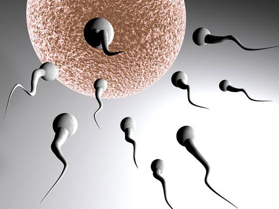 resveratrol e fertilidade blog nutricao joyce 3