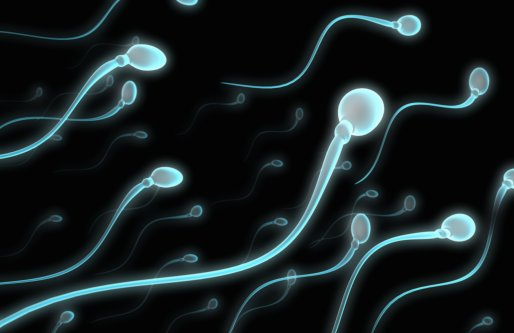 resveratrol e fertilidade blog nutricao joyce 4