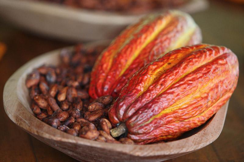 nutricao-joyce-cacau-chocolate-beneficios-para-saude-1