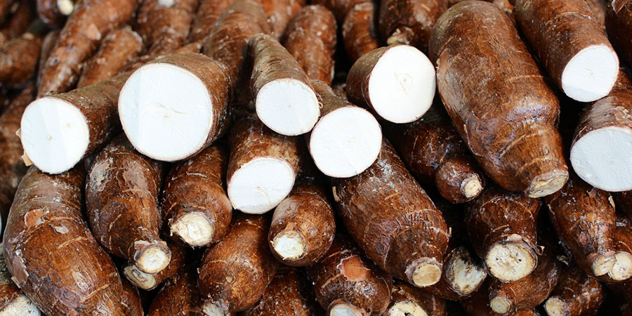 beneficios da mandioca nutricao joyce